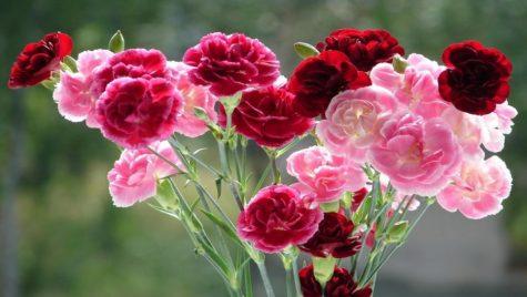 Student Council Carnation Sale